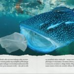 Minęło ponad 150 lat od wynalezienia plastiku! Świętujemy?